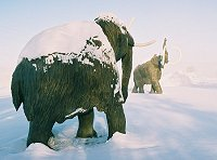 Mammoth statues guard the Beringia Museum in Whitehorse, Yukon, in an ice fog at -40°